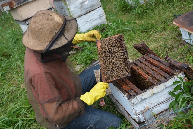 working with honey bees