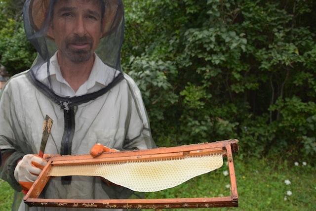 holding up honey comb