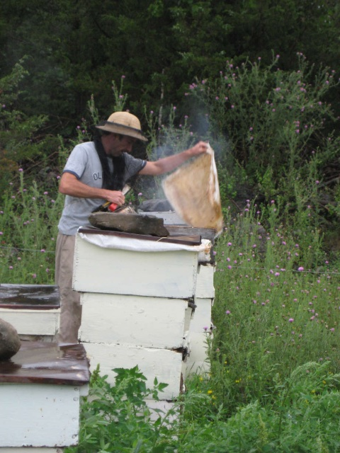 me working with my honey bees